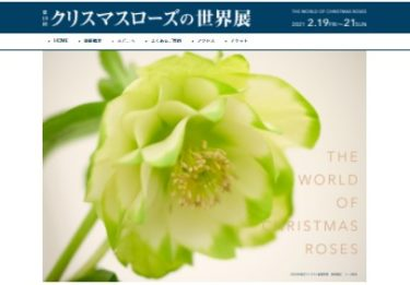ため息をつくほどの美しさ「クリスマスローズの世界展」開催