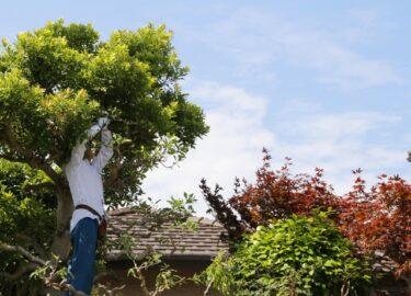 造園業の転職先はどうやって見つける?各種方法とそのメリット・デメリット
