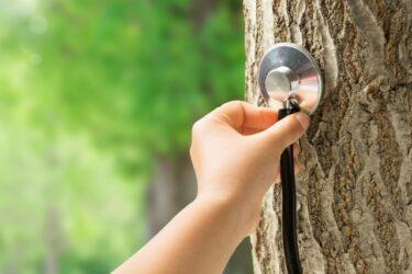 樹木医資格を取るために知っておきたい難易度と勉強時間