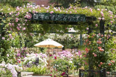 花屋が運営する「練馬区立 四季の香ローズガーデン」オープン