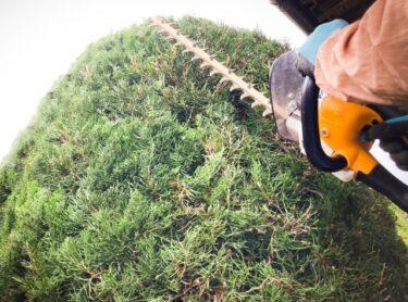 造園業への転職がしたい。お給料はどのくらい?将来性や今の仕事よりもやりがいはある?