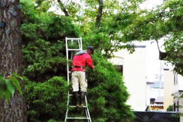 造園業への転職が気になる。給料はどのくらい?将来性ややりがいはある?