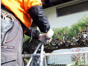 造園業で活躍する造園技能士とは?仕事内容や資格について解説