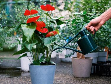 Domuzが植物専門家が厳選した園芸グッズを販売開始