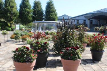 草津市立水生植物公園みずの森、ハロウィンイメージの特別装飾実施中